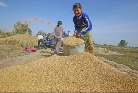 Single rice brand stirs the pot